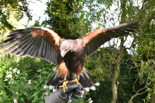 Country Pursuits Hands On Falconry